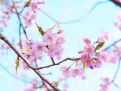 春を先取り