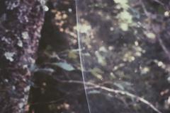 クモが作り上げたカーテン