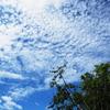 みぞれ雲①