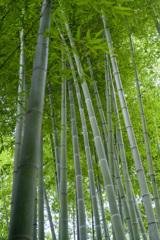 幽静なる竹林