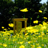 黄色いドア