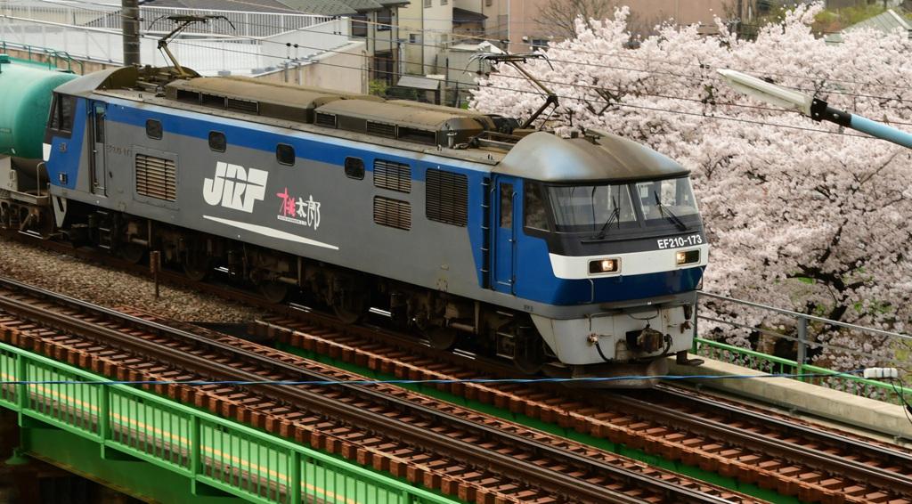 桜桃太郎2