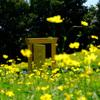 黄色いドアの近くへ