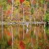 秋彩を映す
