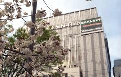 秋葉原の桜