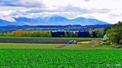 錦秋のビート畑