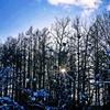 木漏れ日ブルー