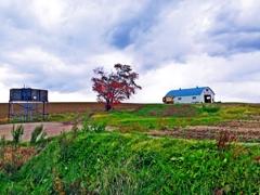 農繁期の丘