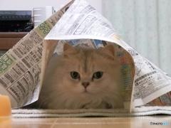新聞紙に潜って佇む