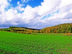 秋蒔き小麦と紅黄葉