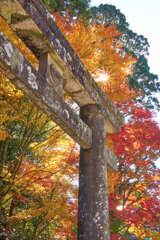 英彦山神宮 9