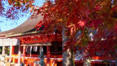 英彦山神宮 5