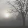 霧たちこめる朝