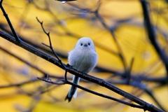 かわいい小鳥
