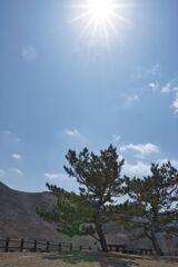 曾爾高原の一本の木