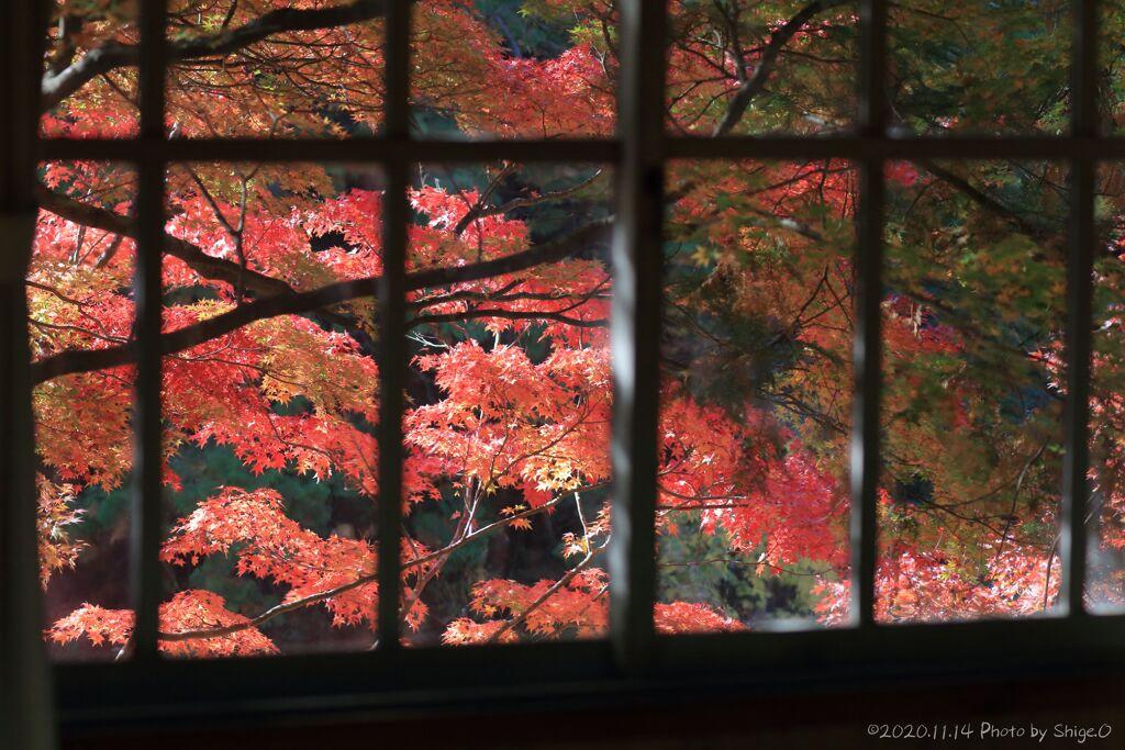 大滝神社の紅葉2