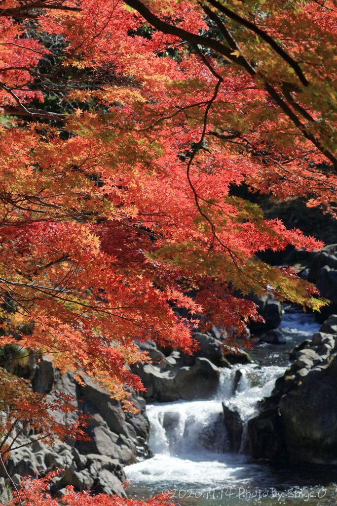 大滝神社の紅葉5