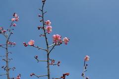春が来た 梅3