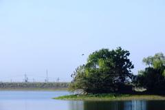 中の島は鳥の島