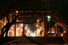 枯木と鳥居と街の灯