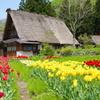 五箇山の春