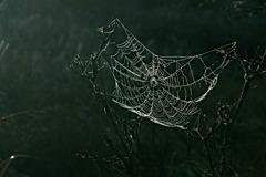 torn spider's web