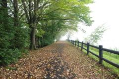 秋霧の小道