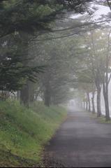 秋霧の歩道