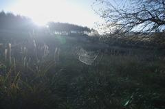 蜘蛛の巣がある風景