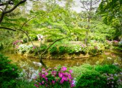 ツツジの庭