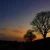 黄昏の喬木