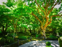 圓光寺 新緑の頃