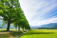 続く並木と広がる田園