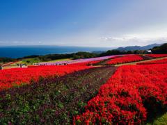 眩しい赤の園