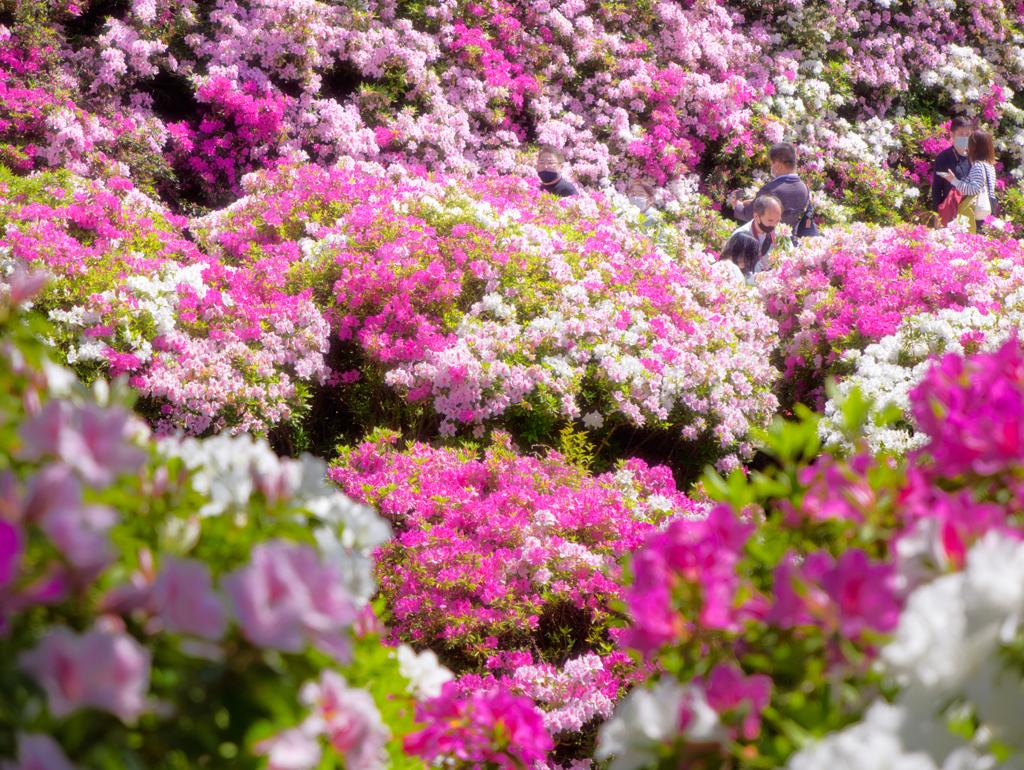 花盛りを覗く