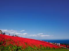 赤い丘の眺め