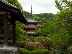 三室戸寺の晩春