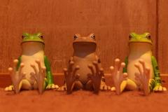 ストロボと座る大蛙くんたち