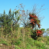 青空と赤い実のなる木