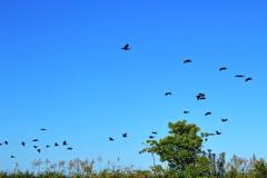飛び立つ鳥の群れ