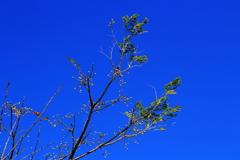 青空に溶け込んだ木の実