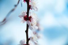 春の訪れ③