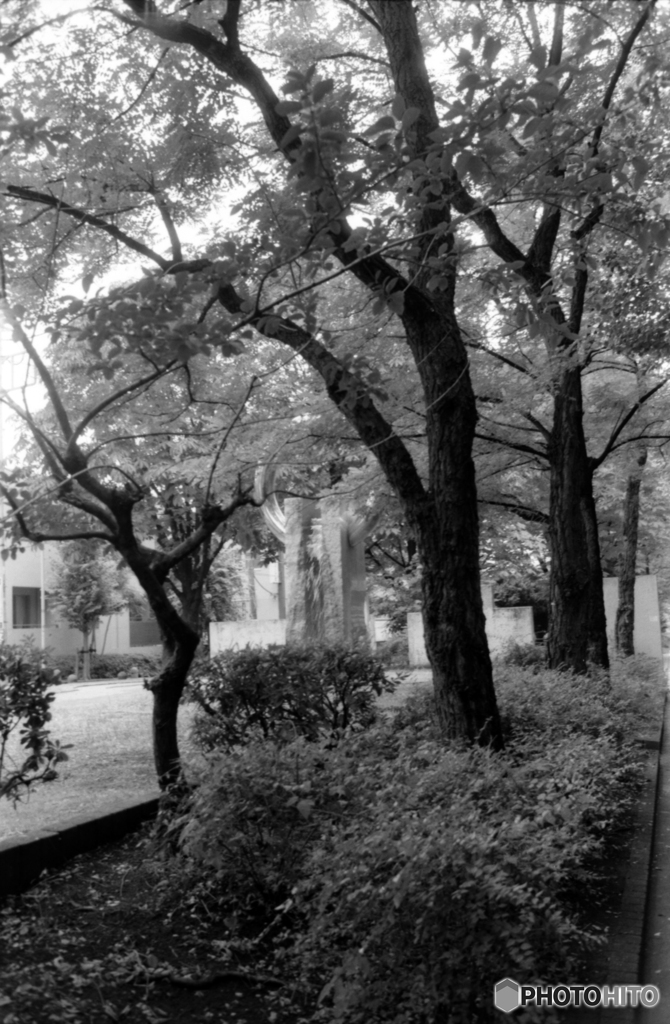 甲州街道沿い初台付近の公園