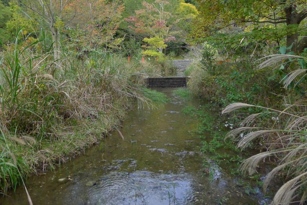 緑 小川 静流