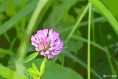 紫色の花・1