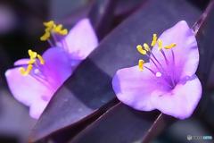 紫色の花・2