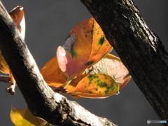 「深秋の候」