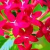 我が家の花・2