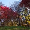 紅葉と青空1