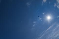 雲と太陽と鳥